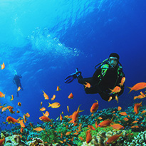 Top 5 Scuba Diving Locations in the UAE