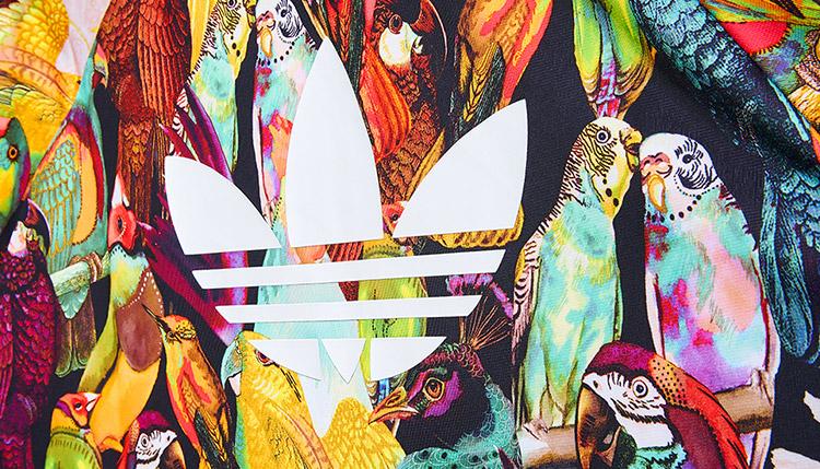 adidas Originals Passaredo close up parrot
